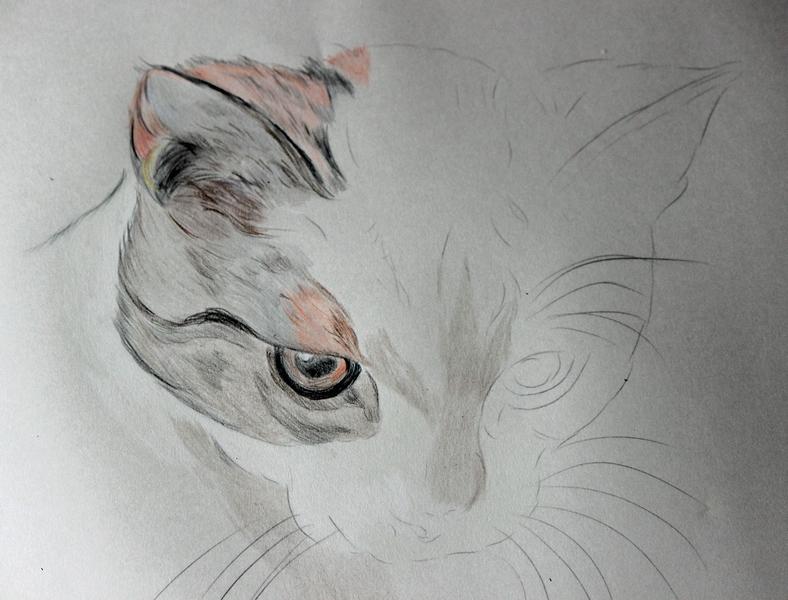 Katzenzeichnung Img_2113