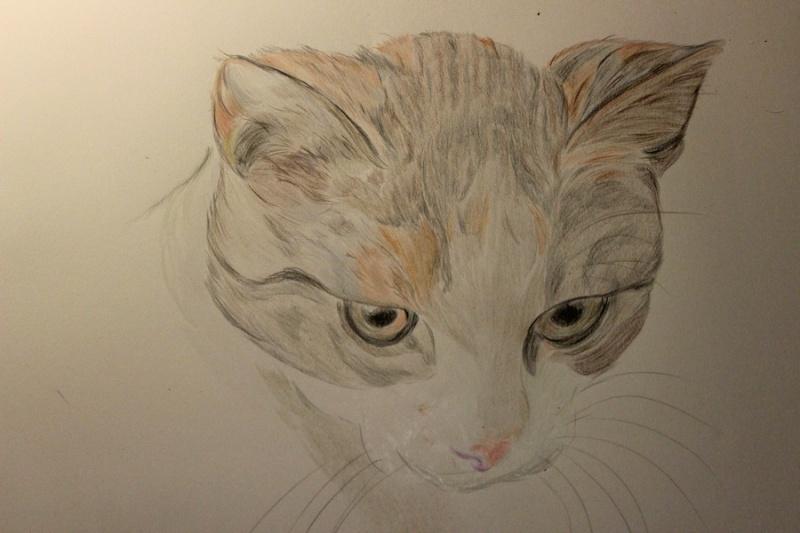 Katzenzeichnung Img_2114