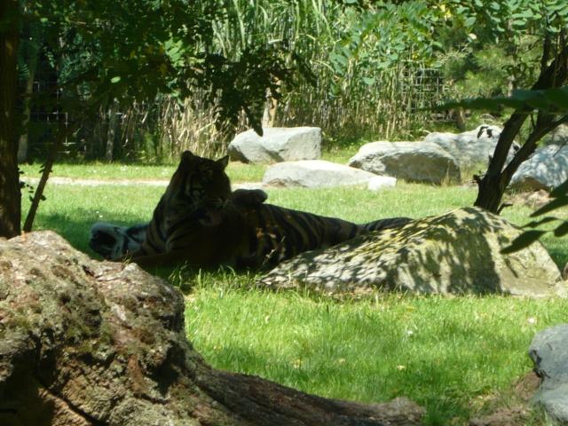 zoo de La Flèche P1060610
