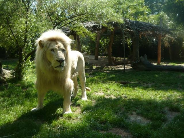zoo de La Flèche P1060712
