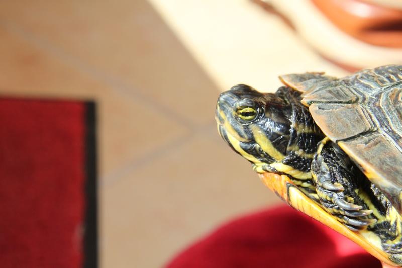 Quelle espèce de tortue Img_8513