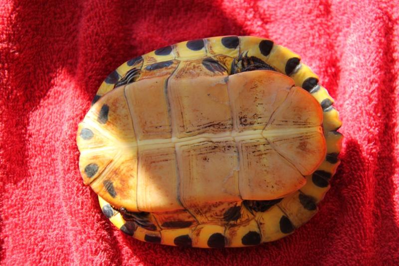 Quelle espèce de tortue Img_8515