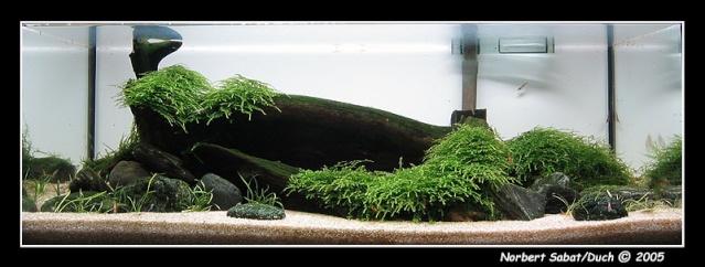Aqua Nature 44_00810