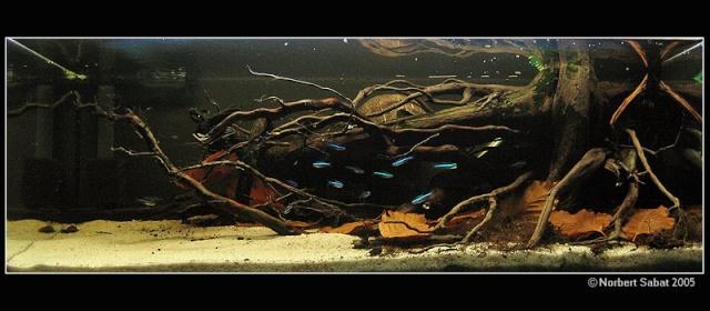 Aqua Nature Sa_00110