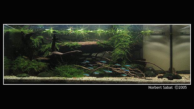 Aqua Nature Top4410