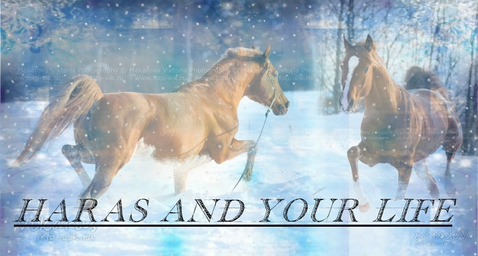 Haras And Your Life