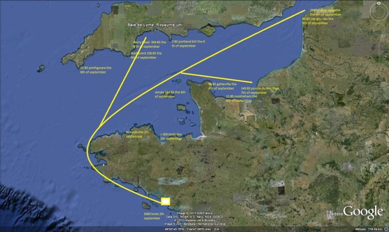 Suivi 2012 Puffin des baléares (Puffinus mauretanicus) en Bretagne Channe10