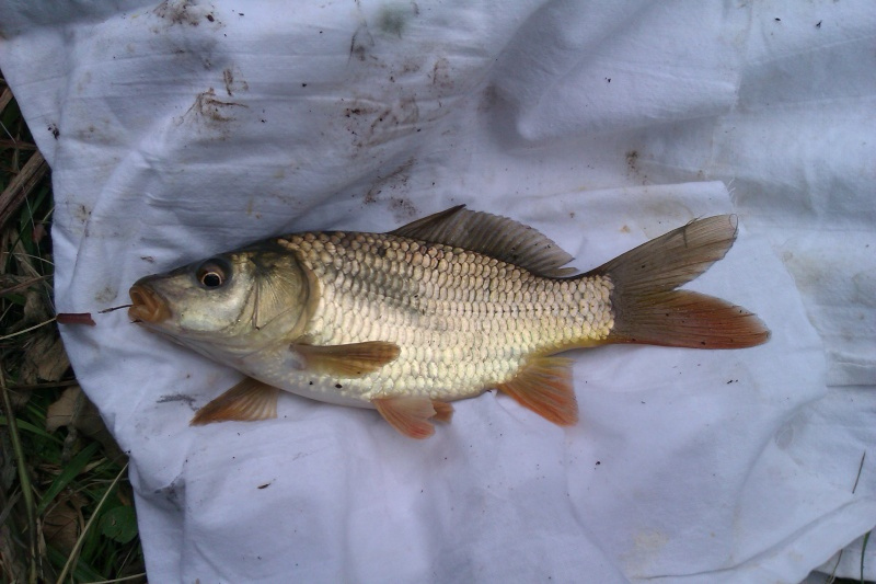 Question de débutant pour pêche en lac. - Page 3 Imag0010