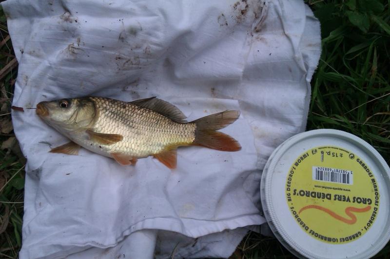 Question de débutant pour pêche en lac. - Page 3 Imag0011