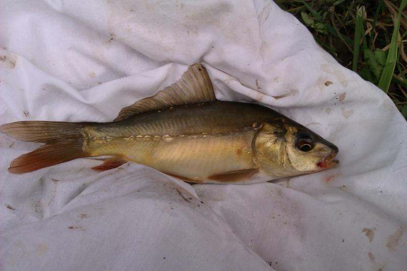 Question de débutant pour pêche en lac. - Page 3 Imag0013