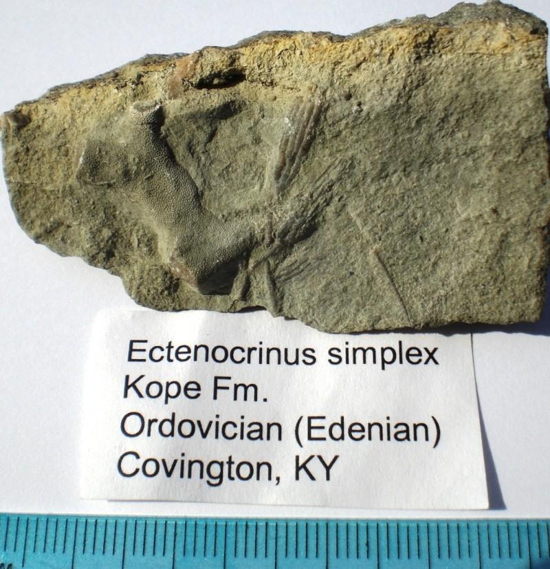 USA -Echinodermes- Cimg1412