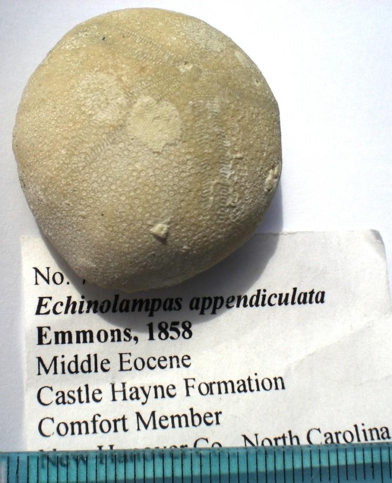 USA -Echinodermes- Cimg1516