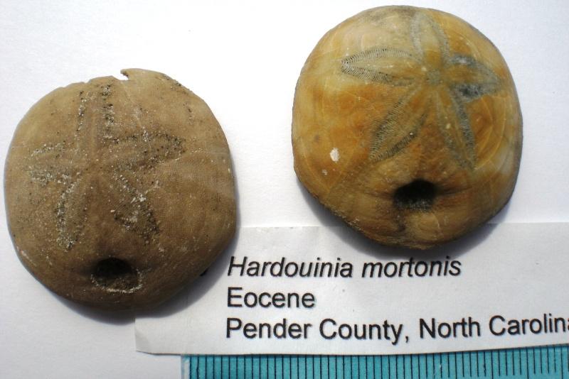 USA -Echinodermes- Cimg1517