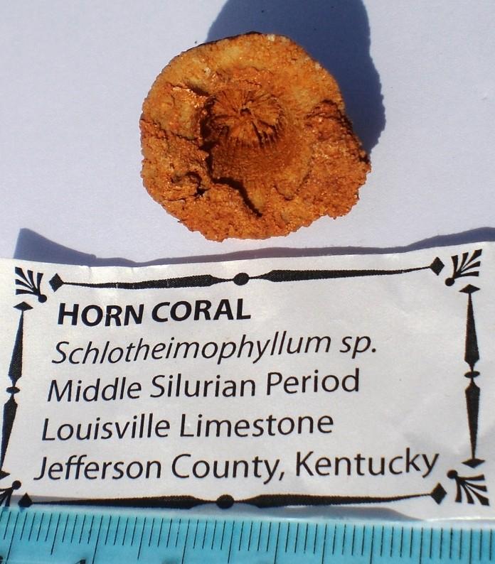 USA-coraux et bryozoaires- Cimg1640