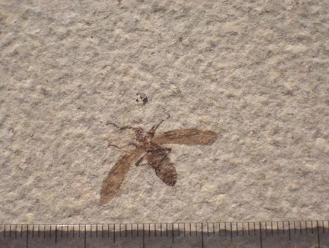 USA-insectes- Cimg9910