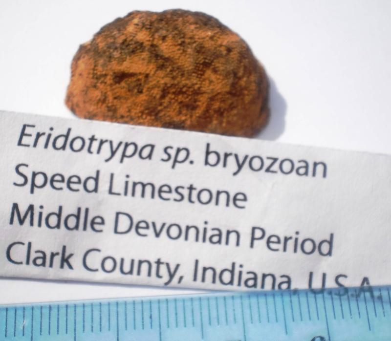 USA-coraux et bryozoaires- P6191531