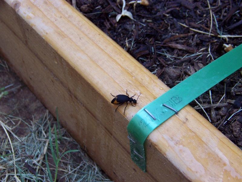 Name that bug 100_3510