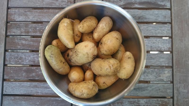 Pommes de terre sur Gazon 2018-014