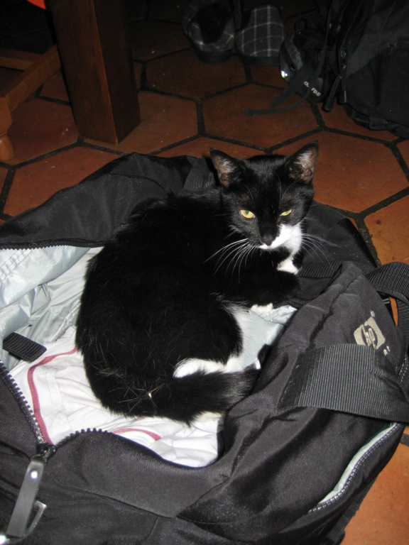 KIMY (1 an) et SUSHI (6 mois) - Page 3 Img_3610