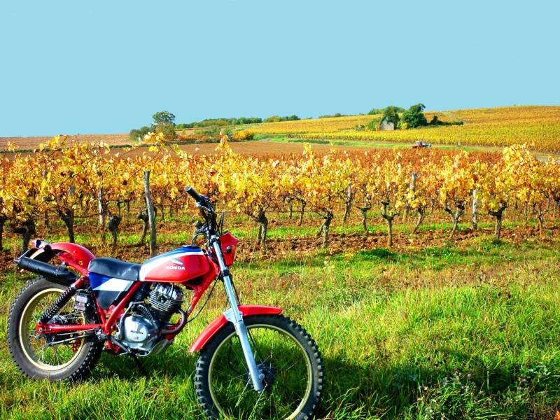"""concours photo oct 2011"""", Votre Honda en automne."""" P1020414"""