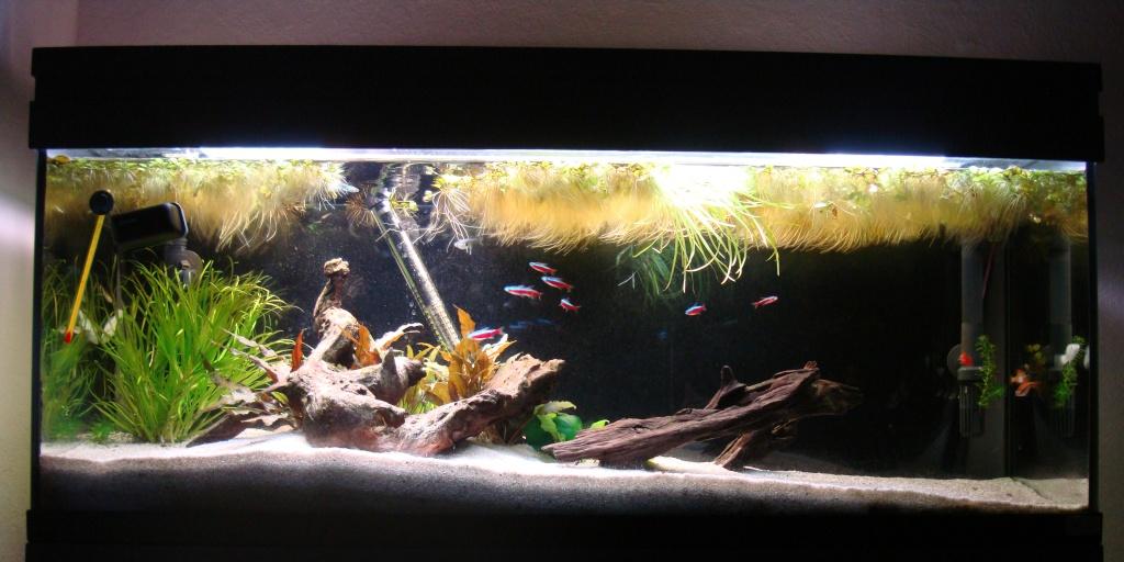 Réfection ou confection d'un aquarium !?... 2012-053