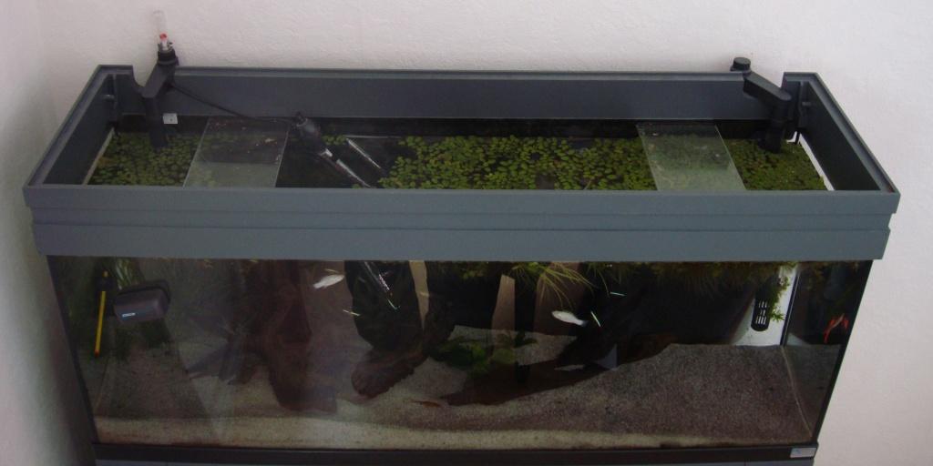Réfection ou confection d'un aquarium !?... 2012-056