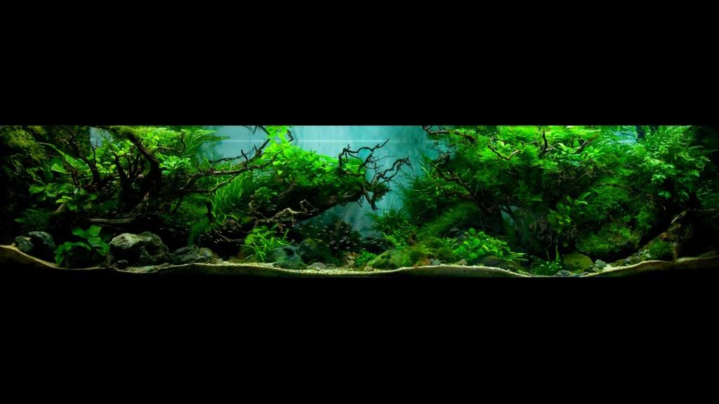 Réfection ou confection d'un aquarium !?... 2680711