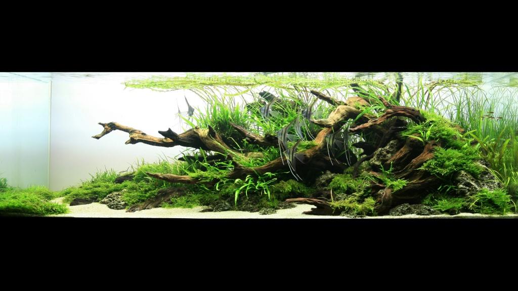 Réfection ou confection d'un aquarium !?... 2681812