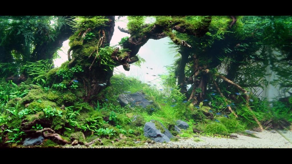 Réfection ou confection d'un aquarium !?... 2681913