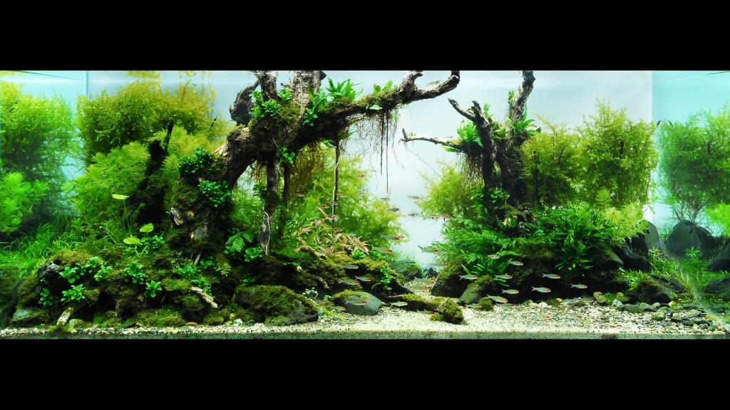 Réfection ou confection d'un aquarium !?... 2682011