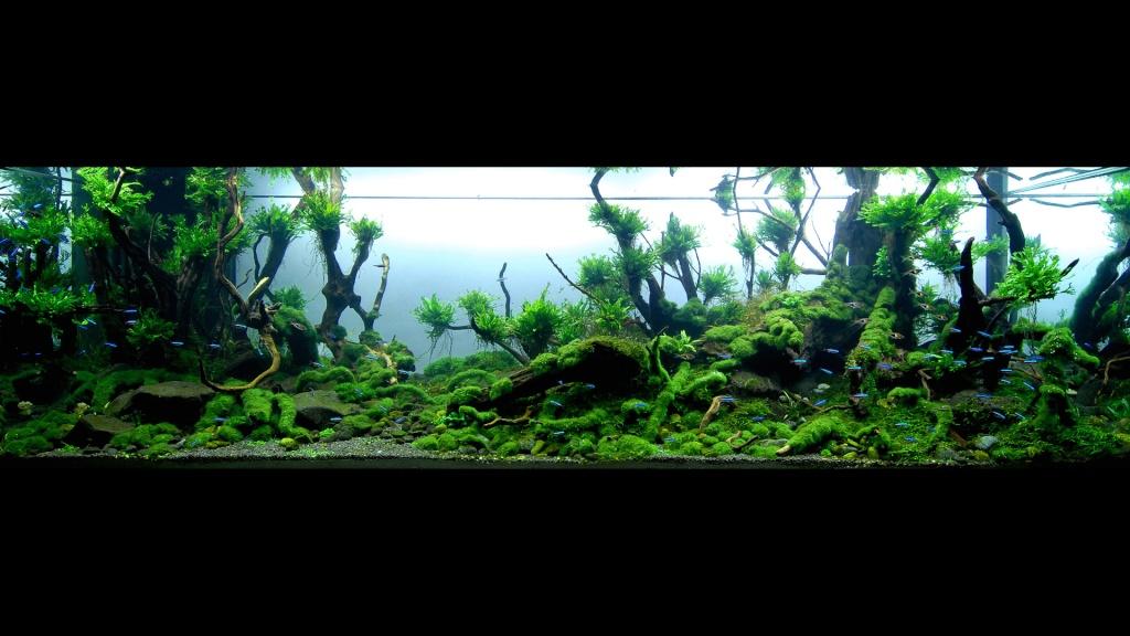 Réfection ou confection d'un aquarium !?... 2682912
