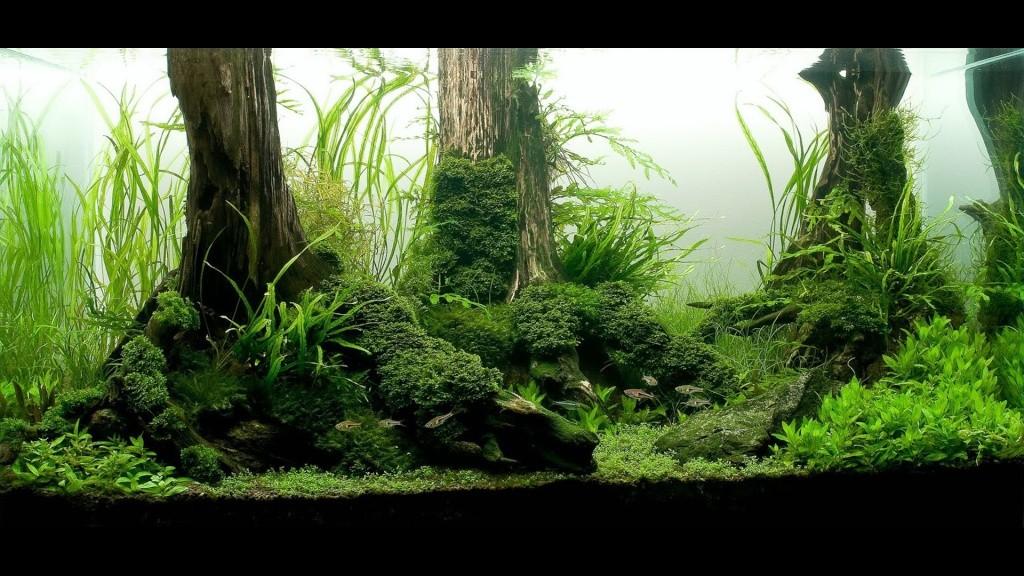 Réfection ou confection d'un aquarium !?... 2_stan11