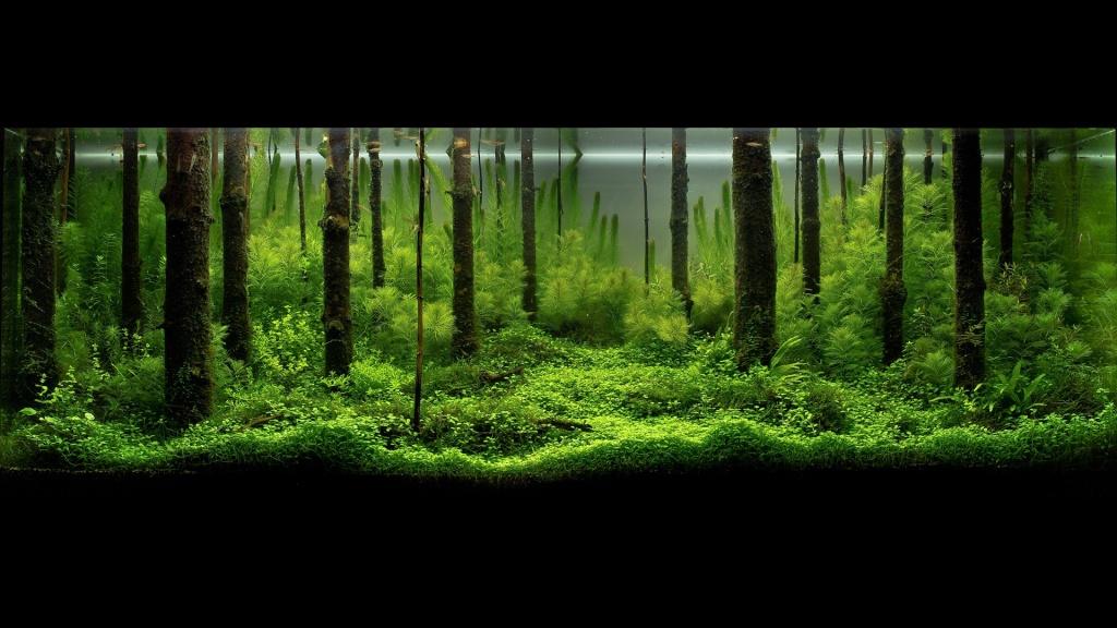 Réfection ou confection d'un aquarium !?... Pavel12
