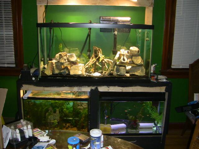 Mulit fish tank stand Img_1210