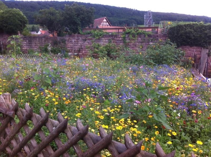 Fleurs de Wangen ,été 2012 ! 55734510