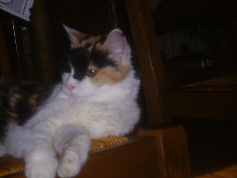 ma chatte refuse de manger les boites pour irc que faire? - Page 32 Toche210