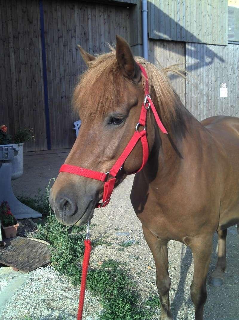 Les chevaux qui on fait partie de moi ! 2011-010