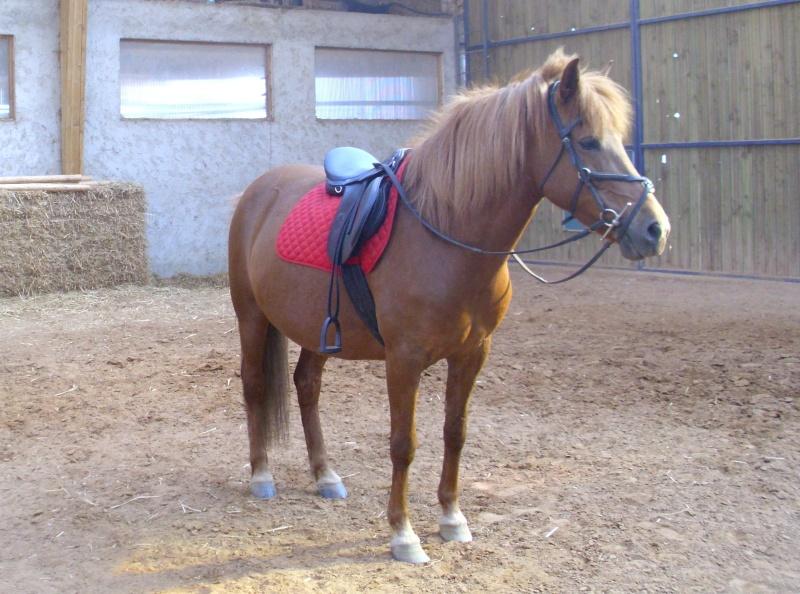 Les chevaux qui on fait partie de moi ! Noiset10