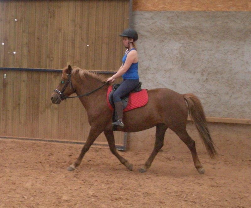 Les chevaux qui on fait partie de moi ! P7070010