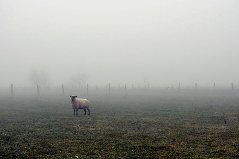 1 mouton ... 1000 moutons Dsc_1125
