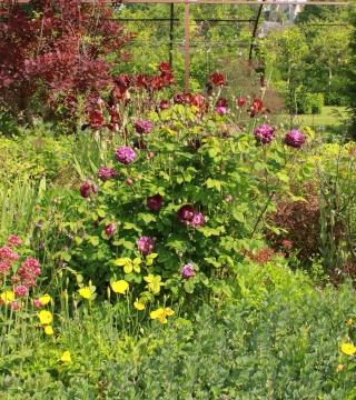 (41) Jardin du Plessis Sasnières 02_06_14