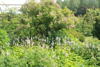 (41) Jardin du Plessis Sasnières 02_06_15
