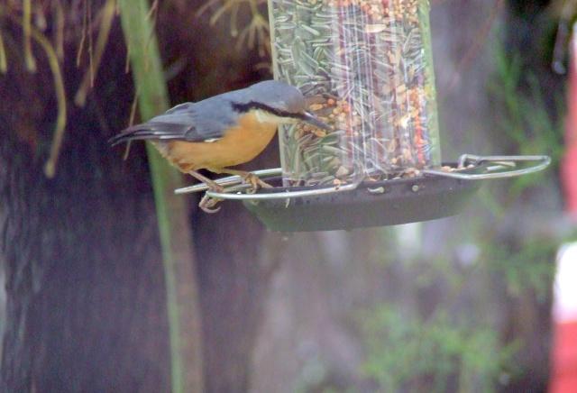 les visiteurs à plumes sauvages - 1 21_10_12