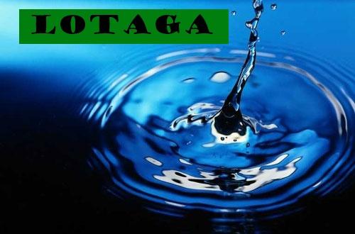 Lotaga