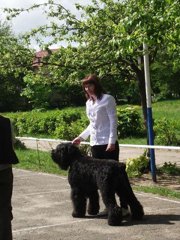 19 мая, Молодечно, Республиканская выставка собак всех пород Getima10