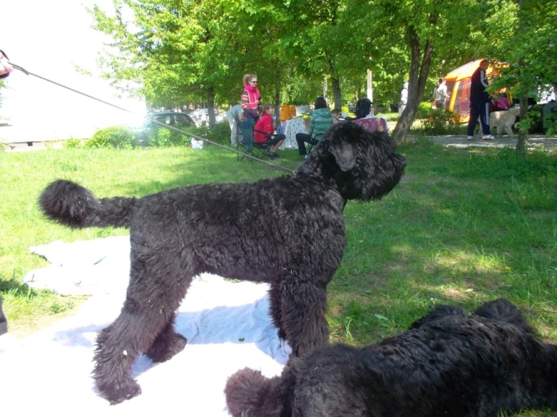 19 мая, Молодечно, Республиканская выставка собак всех пород Ndn10