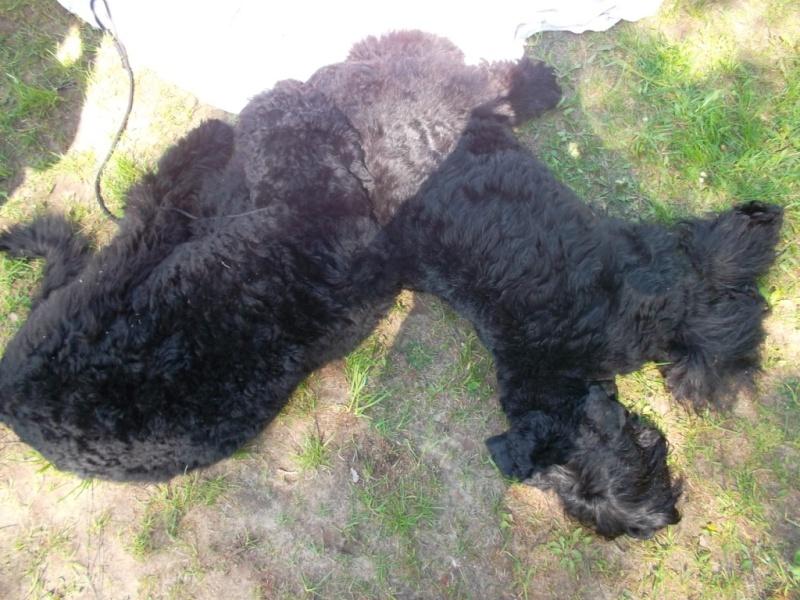 19 мая, Молодечно, Республиканская выставка собак всех пород Ndn_d_10