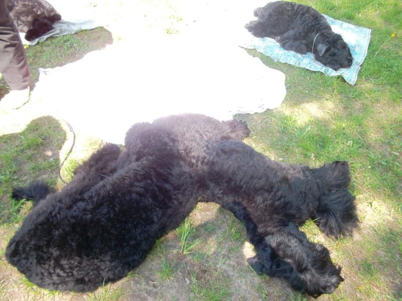 19 мая, Молодечно, Республиканская выставка собак всех пород Ndn_d_11