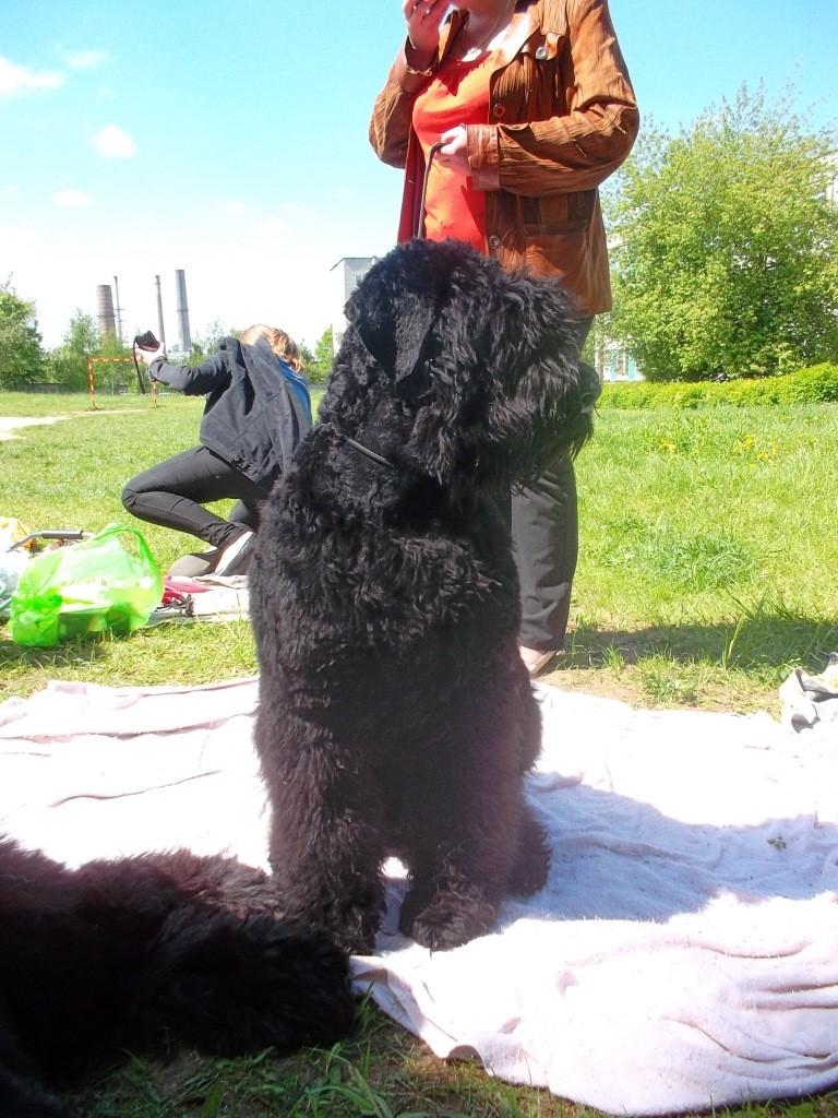 19 мая, Молодечно, Республиканская выставка собак всех пород Ndn_nd18