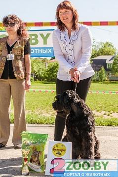 19 мая, Молодечно, Республиканская выставка собак всех пород Ndndd_12